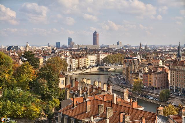 Lyon chartreux